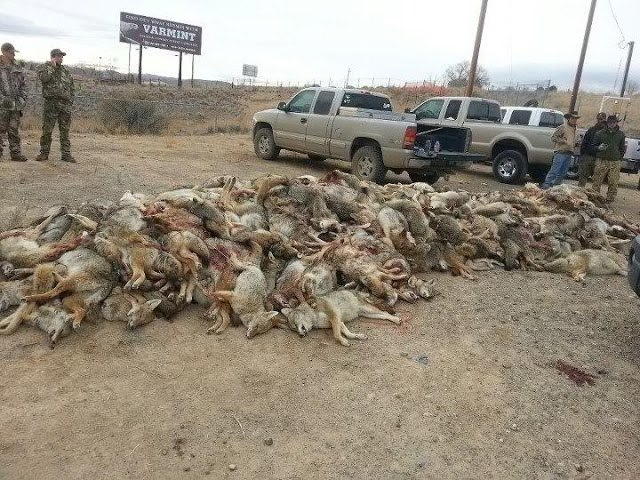 Wildlife Killing Contest