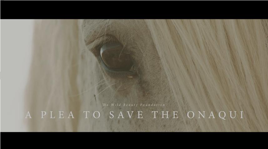 """""""Old Man"""" from the Onaqui wild horse herd in Utah"""