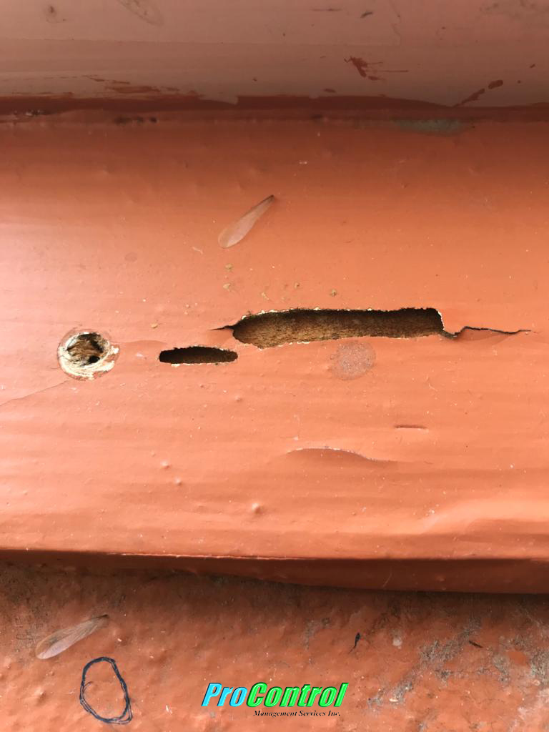 Free Termite Inspection Port St Lucie
