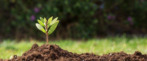 Biotechnology Crop Seeds Market 2019