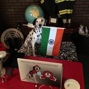 Dog holding flag