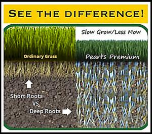 Ordinary grass grows fast above the soil so requires weekly  mowing and has very shallow roots to require more water, versus Pearl's Premium grows so slow requires only monthly mowing and with 4 foot roots needs 75% less water