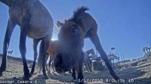 Photo of a curious young horse at the feeding hub