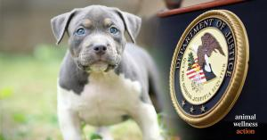 Senate Animal Cruelty Enforcement Act   Photo Credit: Craig Swanson Design