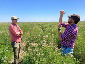 Miles Dakin, Bee Friendly Farming Program Coordinator (L) in the field with an Ecologist from Bowles Farming Company, a certified bee friendly farm,  in Merced County, CA.