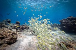 A school of fish on a Maldivian reef, March 2021. Photo by Joe Lepore