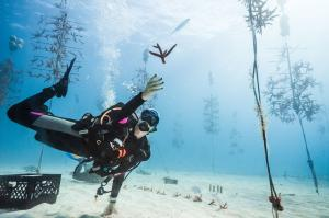 A diver catches a coral in the Coral Restoration Foundation™ Coral Tree Nursery