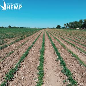 Fiber Industrial AOSCA Certified Hemp Seed