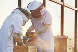 Two beekeepers inspecting a beehive on an urban highrise rooftop